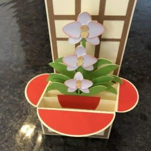 Cardbox orchidee